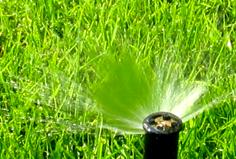 dolecologie.com___Créez vous un jardin original