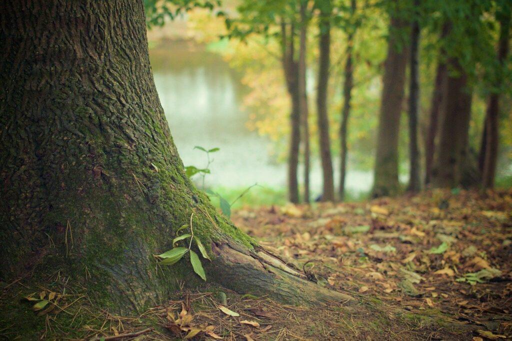 start-up au service des arbres